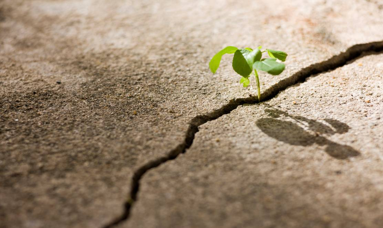 plant-growing-through-crack-in-concrete1.jpg